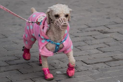 【写真特集】ウイルス対策も工夫次第? マスク作って寄付の動きも