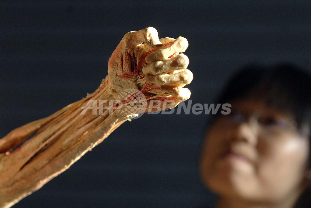 中国で実物の皮膚や臓器を使用した人体展覧会