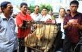 中国「犬肉祭」に抗議、地元住民反発で取引量増も