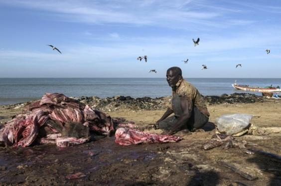セネガルの漁師、数千人が行方不明か 環境団体が安全対策強化訴え