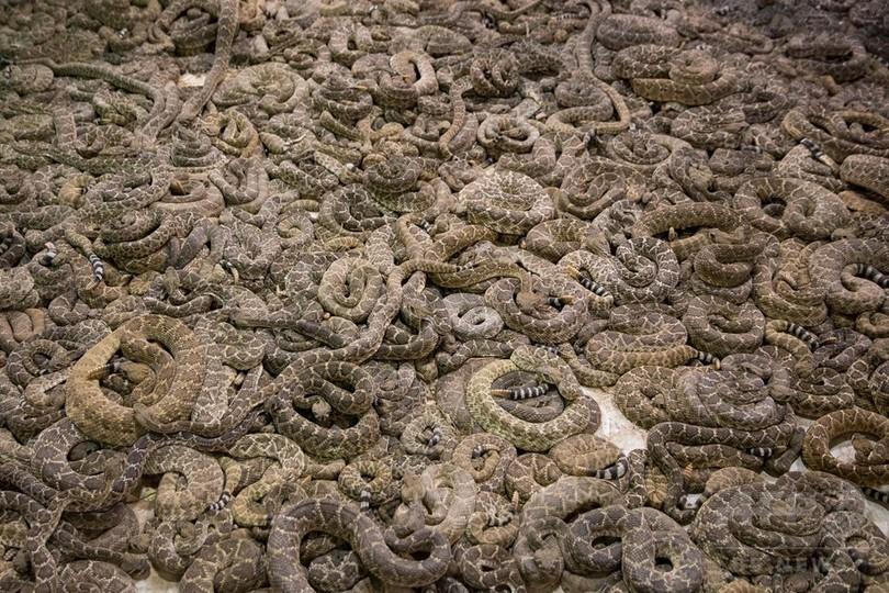 【AFP記者コラム】ヘビへの恐怖、そして同情