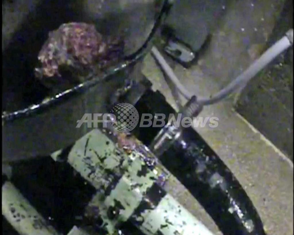 生きたまま粉砕される雄のヒヨコ、愛護団体が衝撃映像を公開