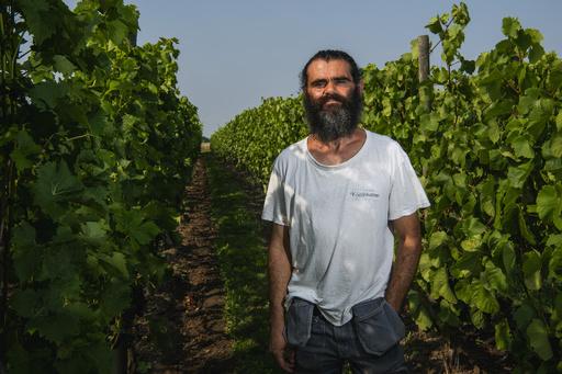 北欧のワイン造り、新種ブドウで気候条件克服 味は「申し分なし」