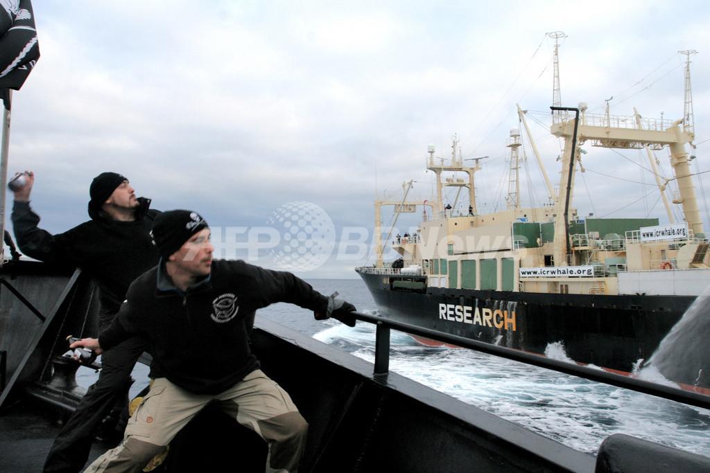 調査捕鯨妨害の活動家、捜査当局へ引き渡しへ 水産庁