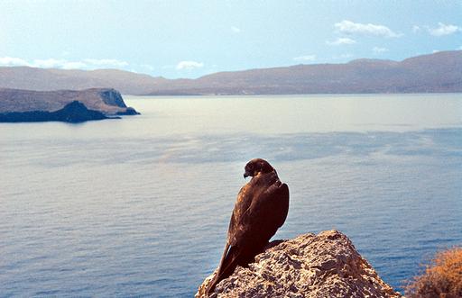 キプロスで絶滅危惧種のタカ数十羽、「射撃練習」で撃ち殺される