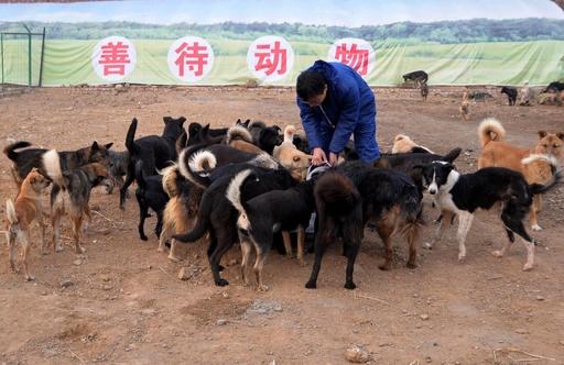 動物虐待を止めろ! 急がれる法整備