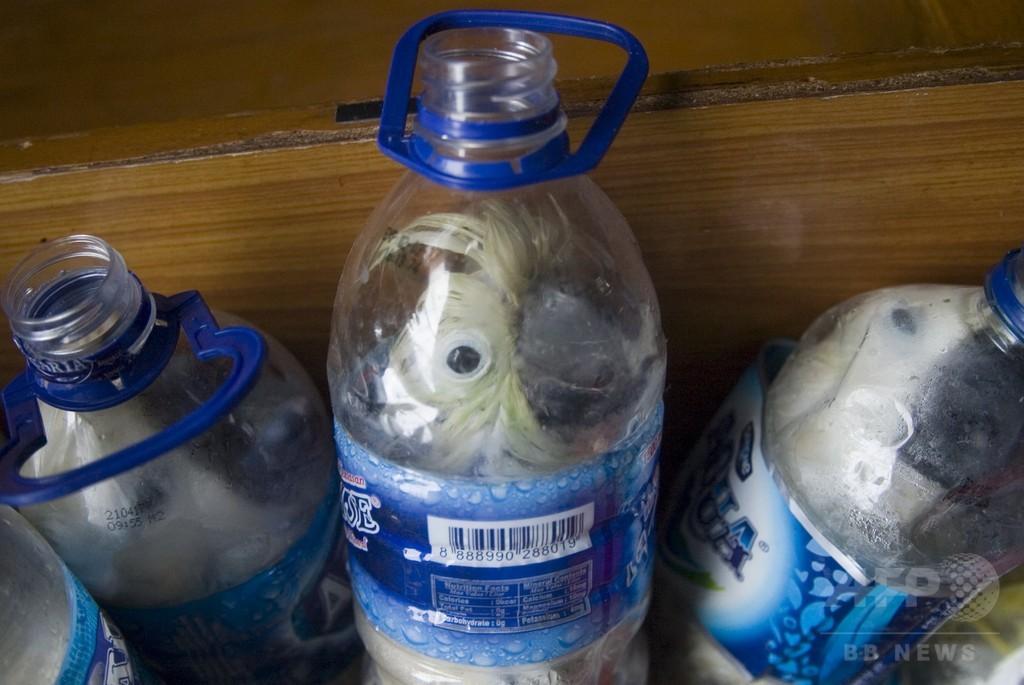 絶滅危惧の鳥をボトル詰めで密輸、男を逮捕 インドネシア
