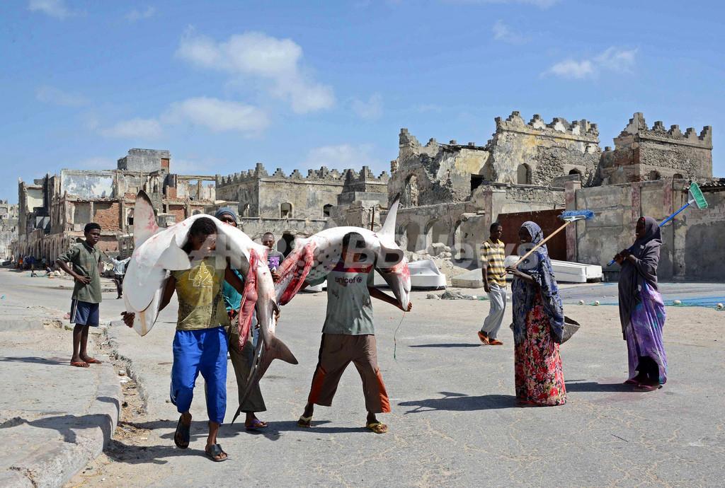 捕れたてサメを直販、ソマリアの漁師たち