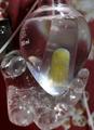 マウスの細胞で「人の指」型アート、都内で展示