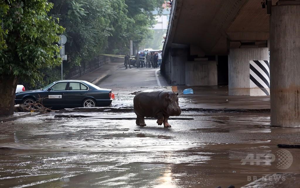 ジョージアのトビリシで洪水、動物園から多数の猛獣逃げ出す