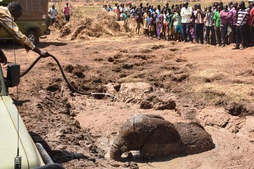 沼にはまった3頭のゾウ、村人ら6時間かけて救出