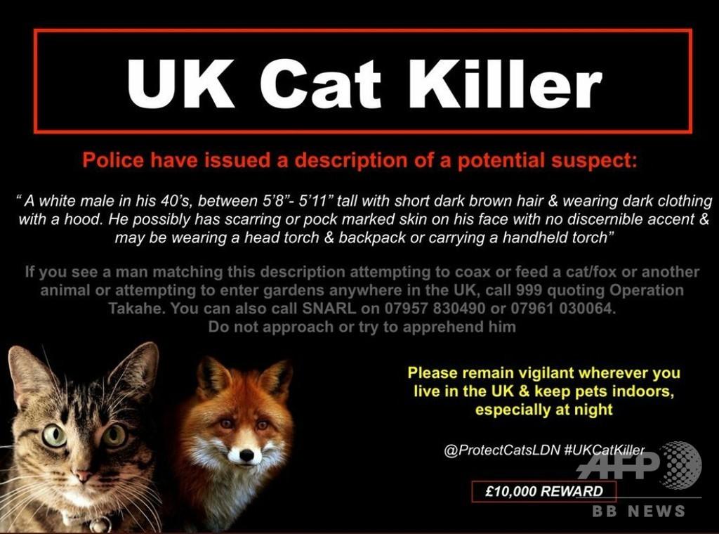 数百匹犠牲のロンドン「猫切り裂き魔」 正体は…、英警察が捜査報告