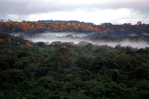 森林保護に経済的インセンティブ、有効性を確認