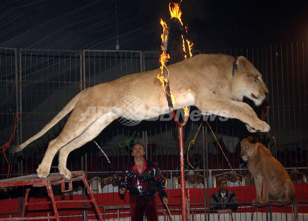 オマーンの文化に触れる「マスカット・フェスティバル」開催 - オマーン