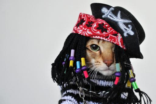 中央アジアの愛猫家たちが大集合!キルギスでネコの展示会