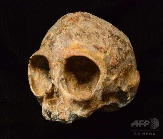 人類と類人猿の共通祖先はアフリカ起源か、頭蓋骨化石が示唆 研究