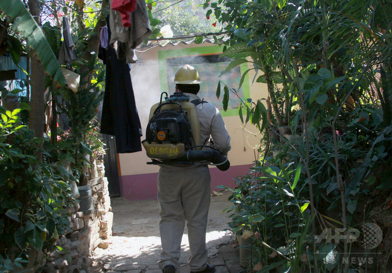 メキシコでジカ感染女性が出産、新生児は「臨床的に健康」