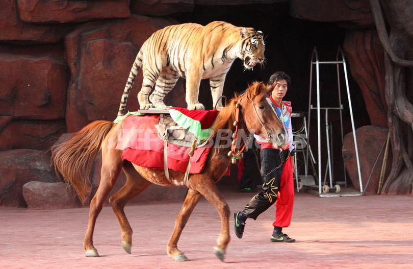 中国 動物園の過酷なショー、愛護団体が非難