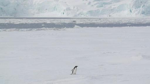 動画:南極で初の20度超え 史上最高気温20.75度を観測