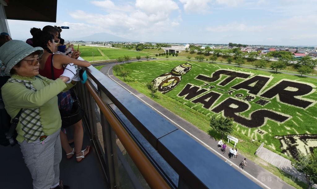 「スター・ウォーズ」の人気者が田んぼアートに、青森県田舎館村