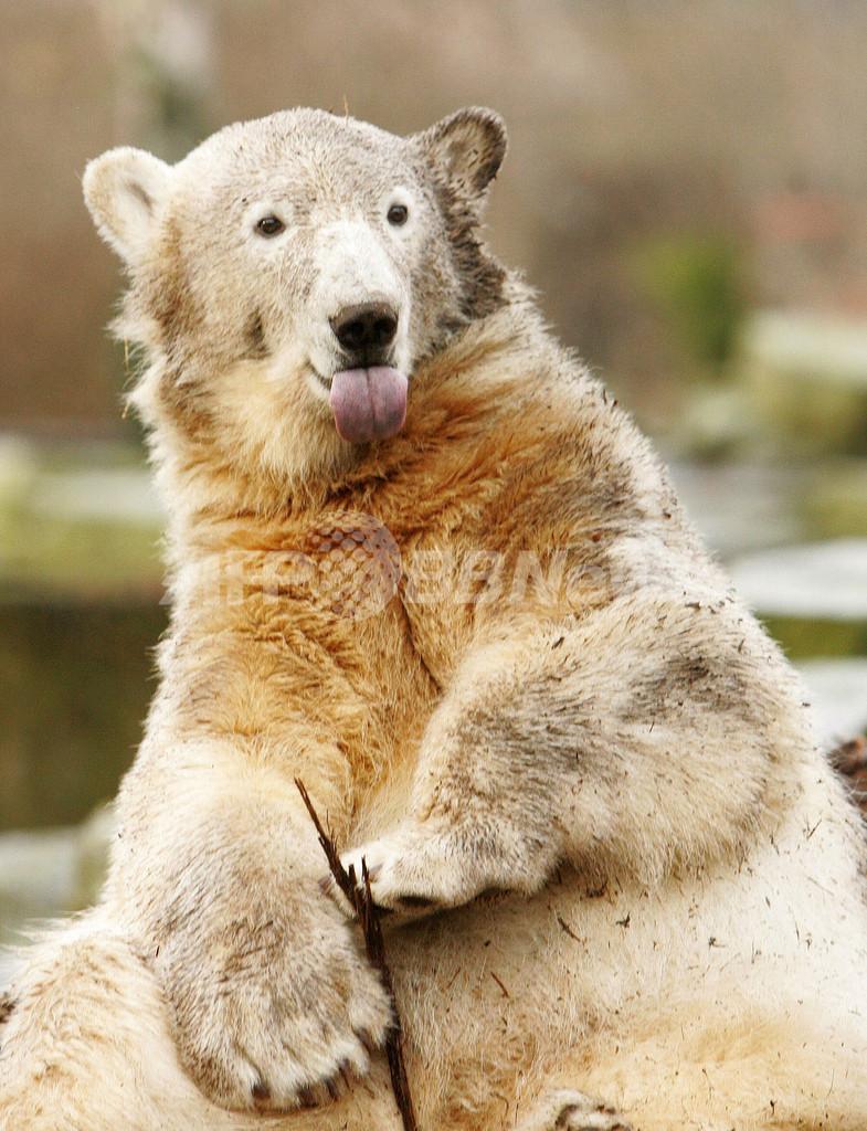 クヌート裁判、ベルリン動物園が5500万円の支払いで合意