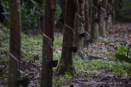 生き埋めの新生児を保護、体に多数の刺し傷 タイ