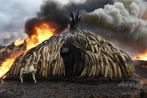 世界自然遺産の半数で違法行為、絶滅危惧種密猟も WWF