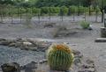 アフリカのナミブ砂漠にブドウ園を作った男