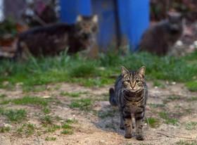 米NY州に劣悪「猫屋敷」、150匹を発見・保護へ