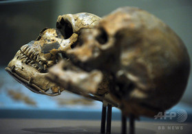 40万年前の頭蓋骨、ネアンデルタール人の祖先なのか