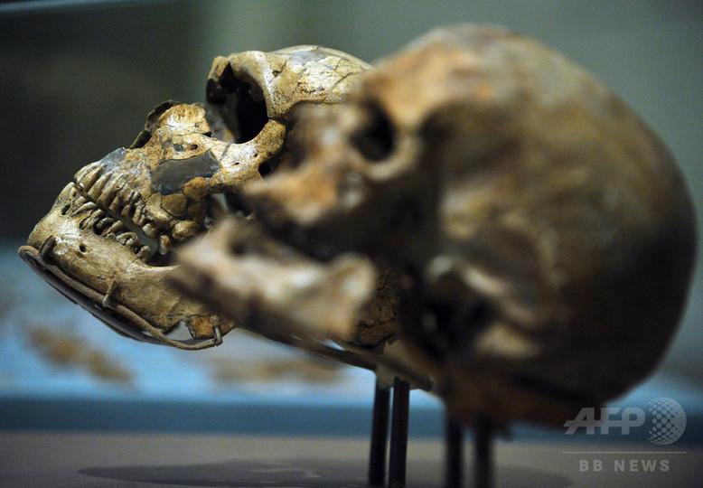 ネアンデルタール人のDNA、人類大移動の年表を書き換え