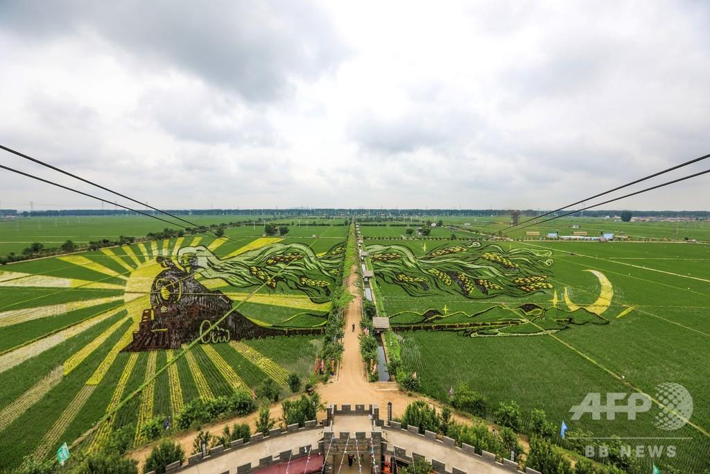 田んぼにMr.ビーン、稲を使った巨大アート 中国