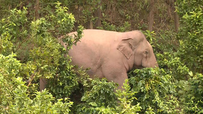 動画:野生のアジアゾウ、食料を求め民家に 雲南・プーアル
