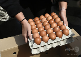 長年の論争に決着? 卵1日1個で病気リスク減 研究