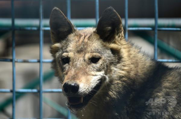 内戦の傷から再建、アフガン唯一の動物園