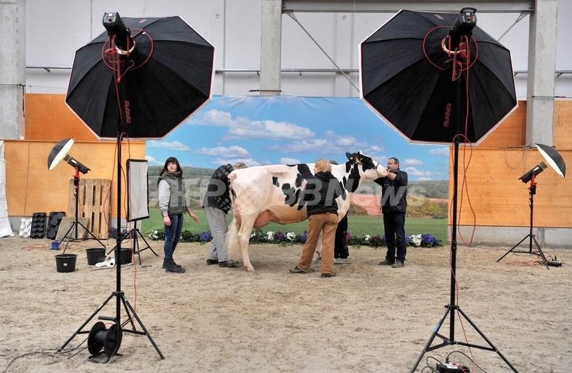 「いちばん美しい牛はワ・タ・シ」、ドイツ乳牛コンテスト
