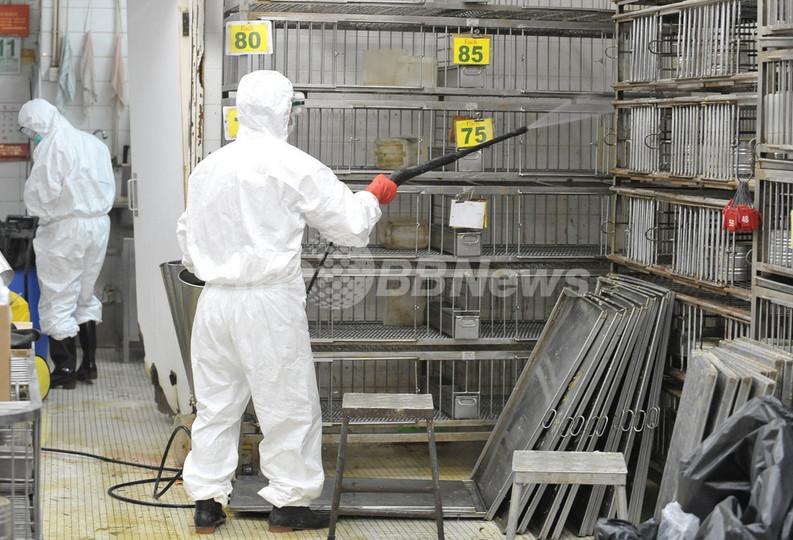 香港当局、市場などの生きたニワトリすべてを処分へ 鳥インフルで
