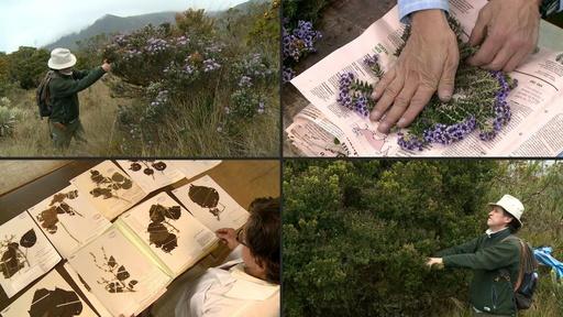 動画:地雷原も越えて…命懸けの植物採取、コロンビアの植物学者