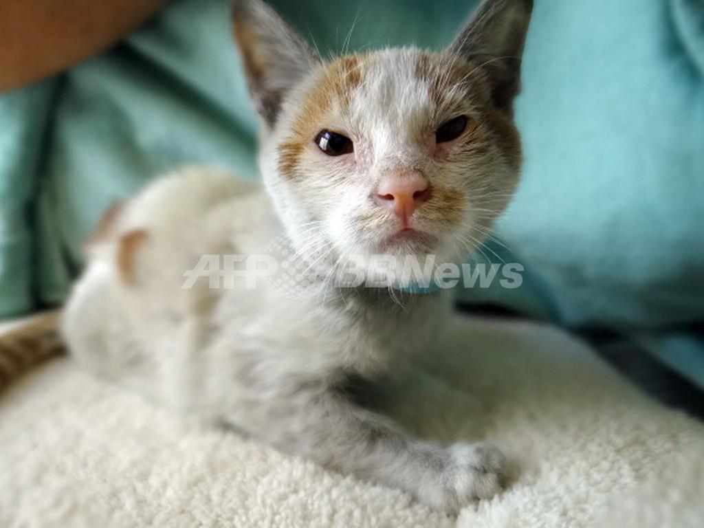 米で中国発のコンテナから子猫を保護、水なしで2週間生き延びる
