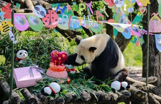ケーキありがとう! パンダのタオタオ、13歳の誕生日