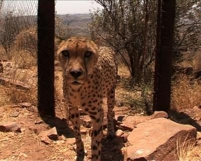 【動画】狩猟と保護は持ちつ持たれつ、ナミビアの野生動物事情