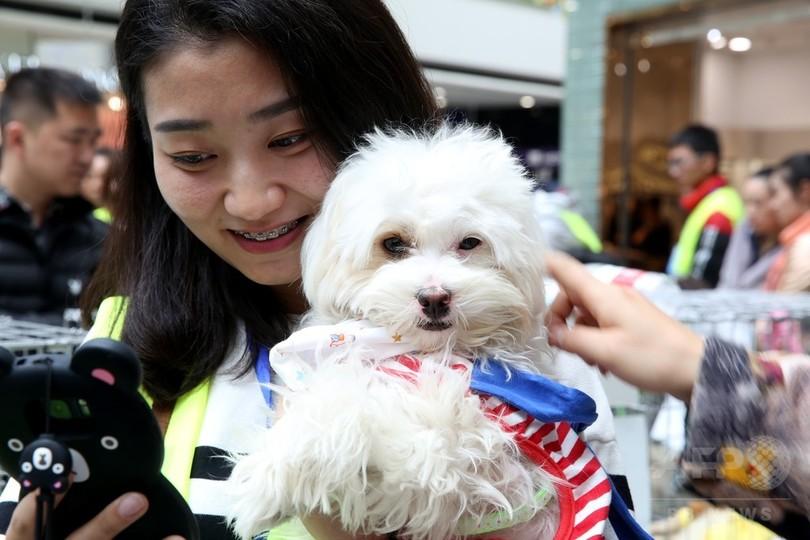 保護猫・犬の飼い主を募集 中国・青海省