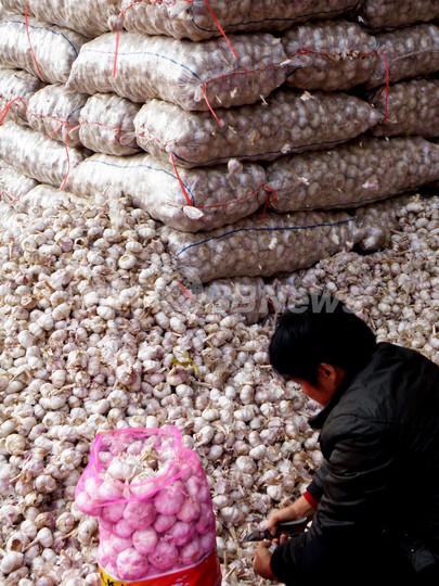 新型インフル予防に効く?中国産ニンニクが40倍に高騰