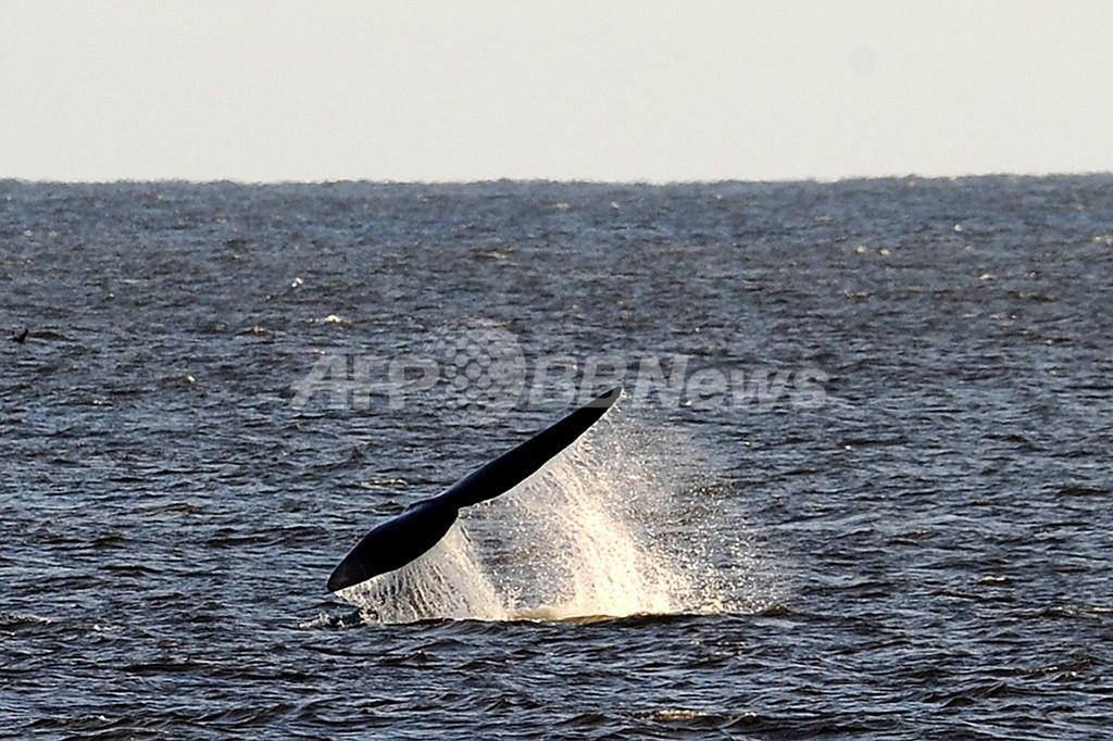 温室効果ガスで海中の騒音増加、鯨類に影響大