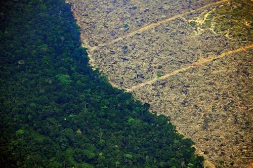牛肉と大豆、アマゾン森林火災に関わるブラジルの2大産業