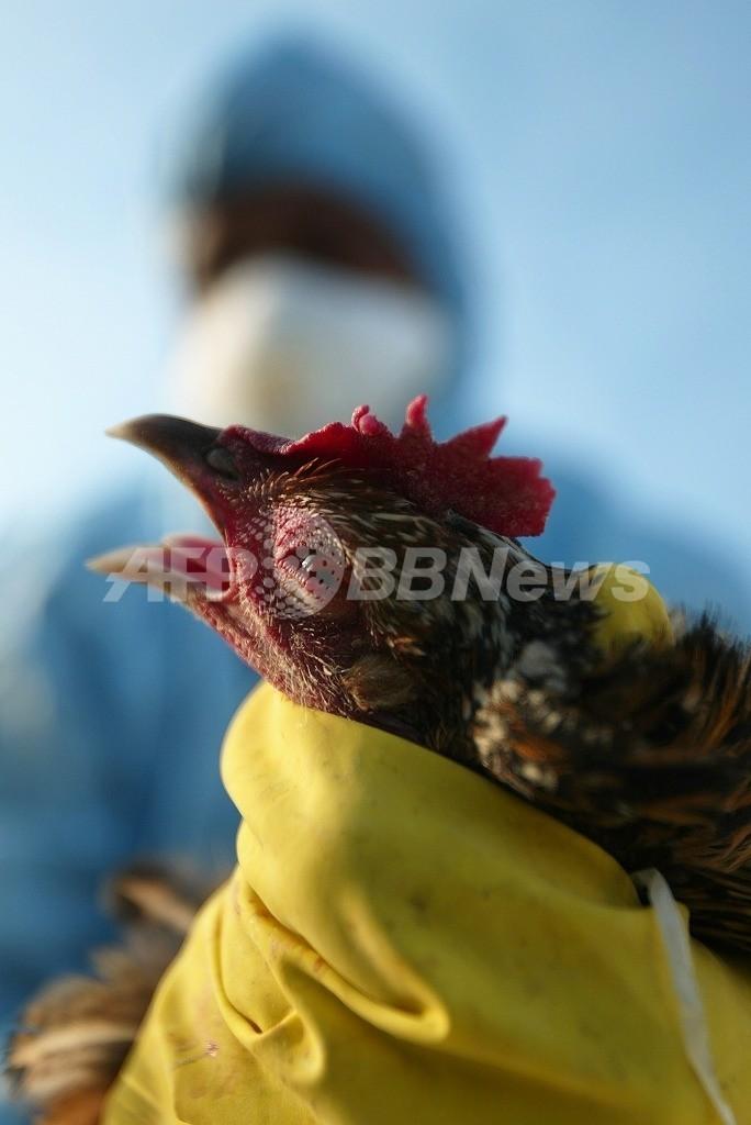 鳥インフルエンザウイルス、ヒトに感染しやすいように進化、米研究