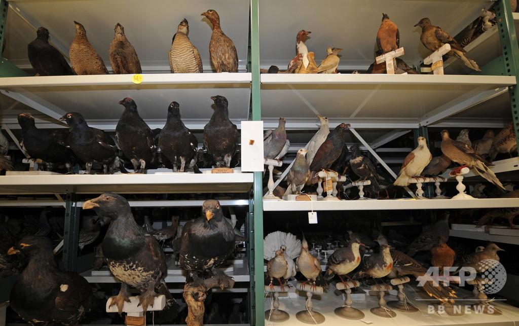 世界の博物館の生物標本、雄に偏り 英研究