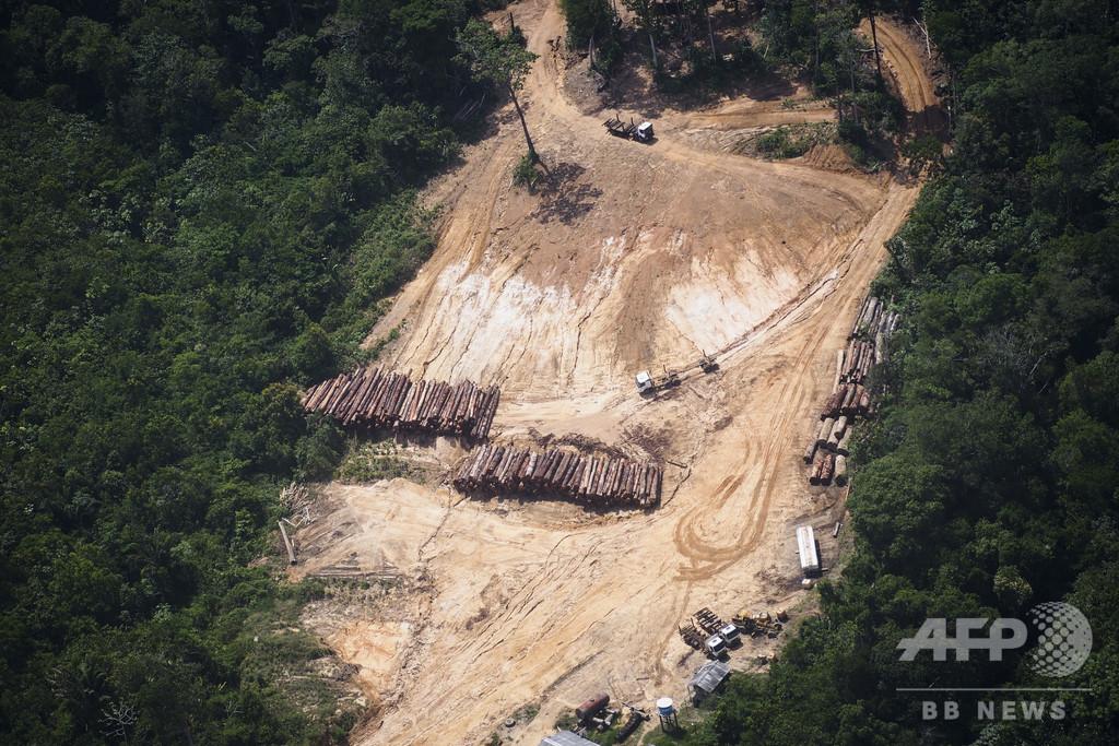 「サッカー場100万面」相当の森林、1年で消失 ブラジル