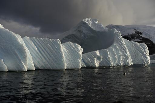 【AFP記者コラム】南極取材、スリルのペンギン撮影記