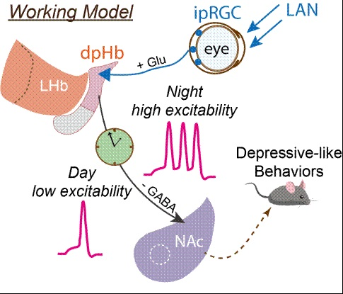 夜間の過剰な光照射、うつ病を誘発か 中国の学者が発見